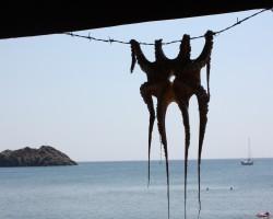 The Island of Lesvos - Greece